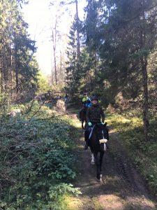 Конные прогулки по лесу