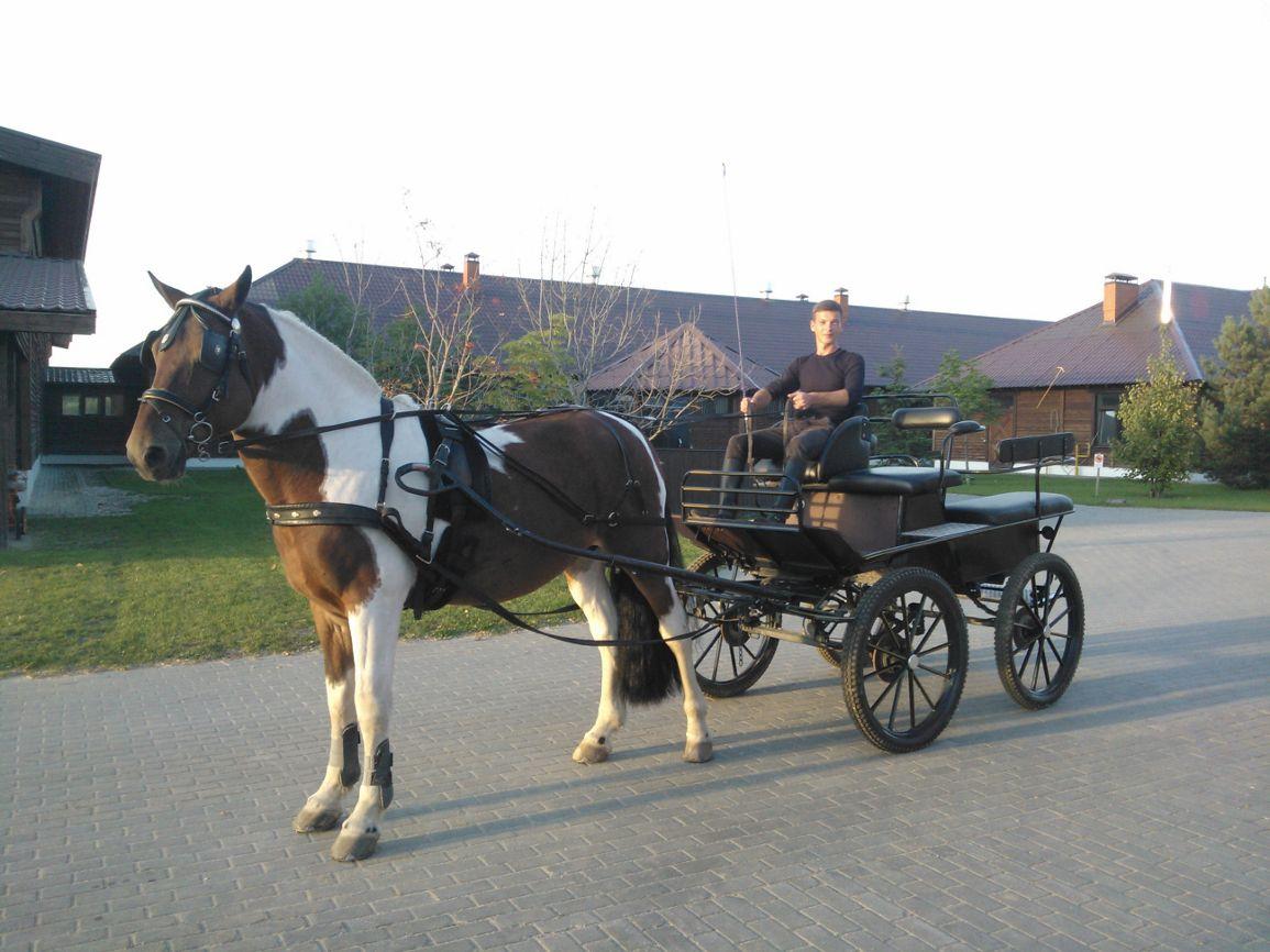 Аренда экипажа с лошадьми